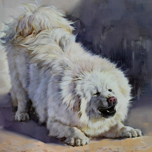 Пушистый белый пес 14
