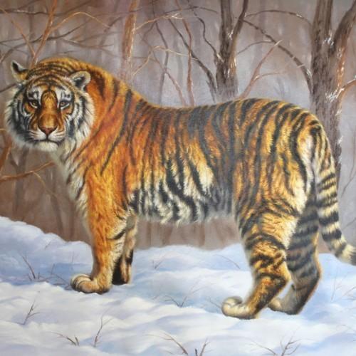 Тигр в зимнем лесу 16