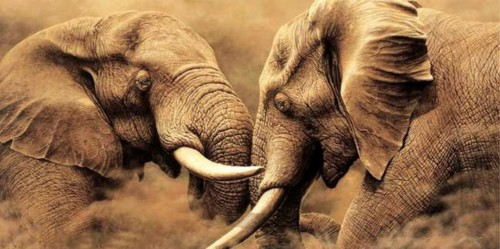 Два мощных слона 26
