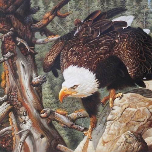 Орлан белохвост на охоте 28