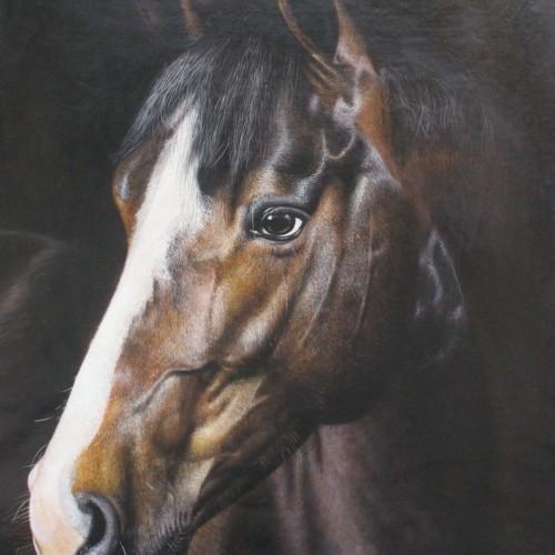 Лошадь 35