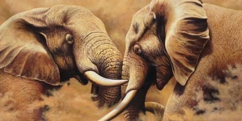 Пара слонов772